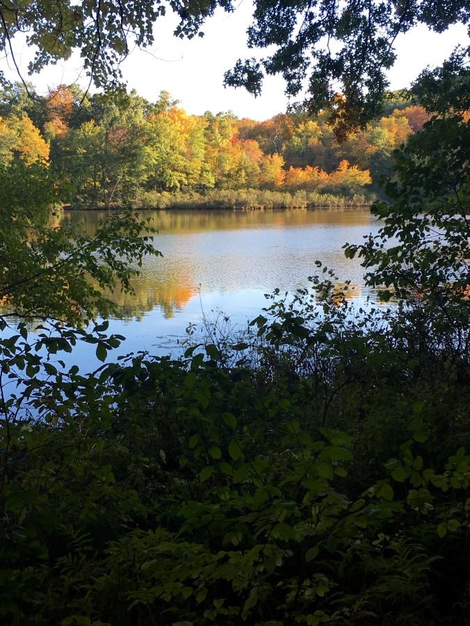 puffers-pond
